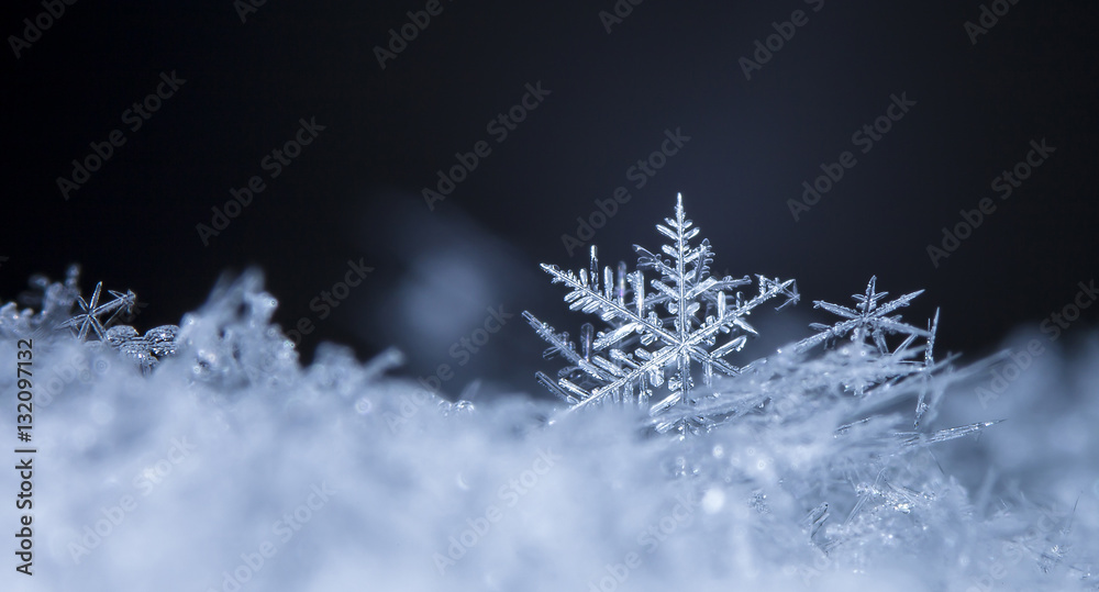 Fototapeta photo real snowflakes during a snowfall, under natural conditions at low temperature