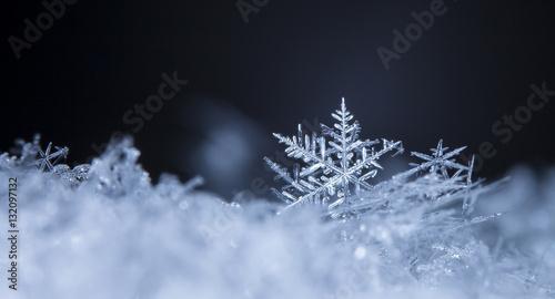 Fototapeta photo real snowflakes during a snowfall, under natural conditions at low temperature obraz
