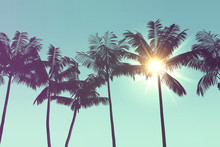 Tropical Palm Tree Silhouette ...