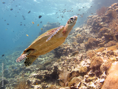 Sea turtle on the coral reef Poster