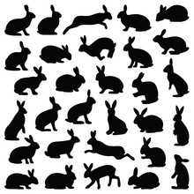 Rabbit And Hare Collection - S...