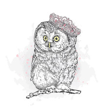 Funny Owl Wearing A Crown. Vec...