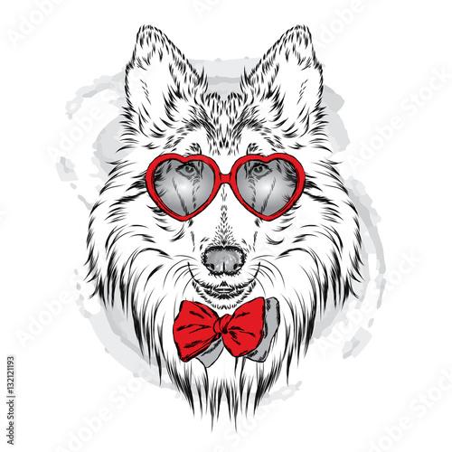 Deurstickers Hand getrokken schets van dieren Cute dog with glasses Heart. St. Valentine's Day. Vector illustration.