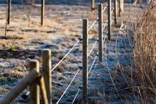 Shallow Focus Electric Fence. Focus On Center Pole And Insulators. Frost On Ground And Pole. Farmland On One Side Of The Fence And Reed On The Other. Background Blurred.