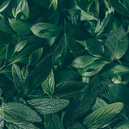 Spoed Foto op Canvas Natuur Creative layout made of green leaves. Flat lay. Nature backgroun