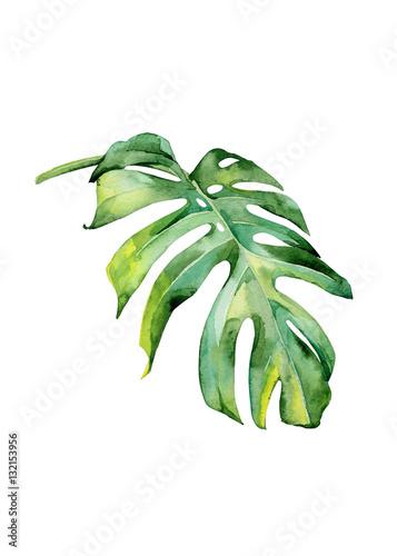 akwarela-ilustracja-tropikalnych-lisci-gesta-dzungla