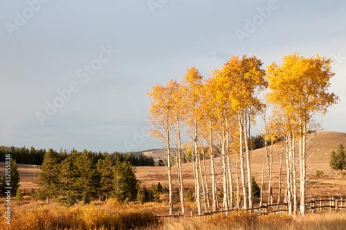 Poster Oranje Wyoming Landscape