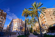 Valencia Spain Street with Palms