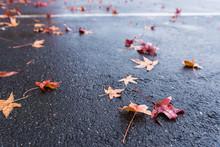Wet Fallen Maple Leaves On Asphalt Closeup