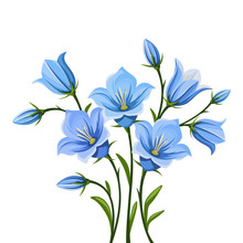 Vector Blue Bluebell Flowers I...