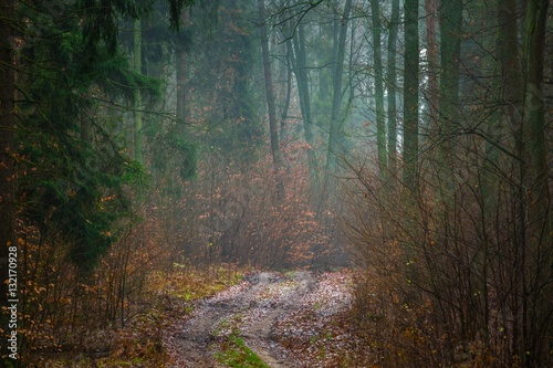 Foto auf Gartenposter Wald Fall forest with beautiful colors and sandy road