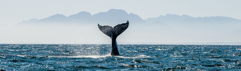 Panel Szklany Natura Seascape with Whale tail. The humpback whale (Megaptera novaeangliae) tail