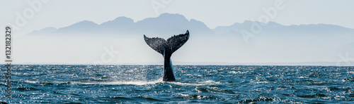 Seascape with Whale tail. The humpback whale (Megaptera novaeangliae) tail