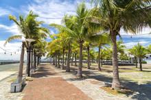 Palms Around Pathway