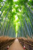 Fototapeta Na drzwi - Path to bamboo forest, Arashiyama, Kyoto, Japan.