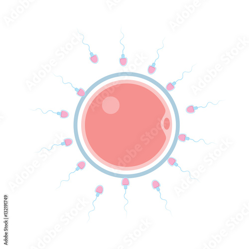Fotografia  male sperm fertilizing female egg