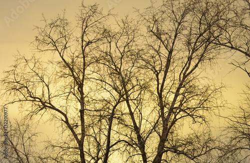 Foto op Canvas Texas Tree at night.