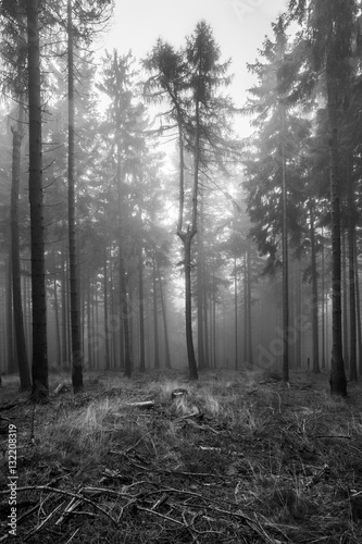 Spoed Foto op Canvas Grijze traf. Colorful autumn in german mountains and forests