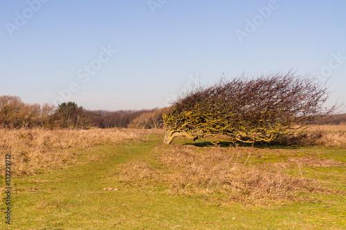 Fotografie, Obraz  Windswept Tree