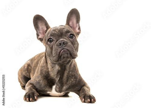 Staande foto Franse bulldog Cute french bulldog lying on the floor