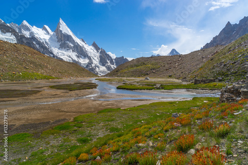 Wild flower at Khuspang camp with Laila peak, K2 trek, Pakistan