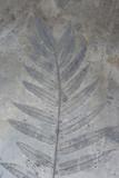 Skamielina liści w skale - 132282598