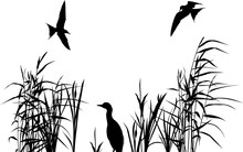 Heron Between Reed Silhouettes Isolated On White