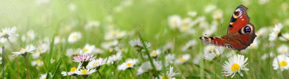 Fototapety, obrazy: Blumen 961