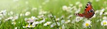 Blumen 961
