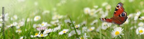 Foto op Aluminium Pistache Blumen 961