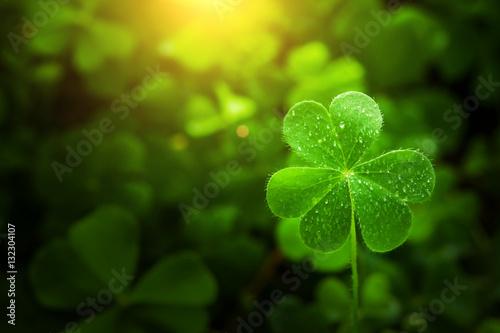 Fotografia clover leaf in lens flare for Valentine background