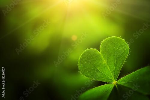 Carta da parati  clover leaf in lens flare for Valentine background