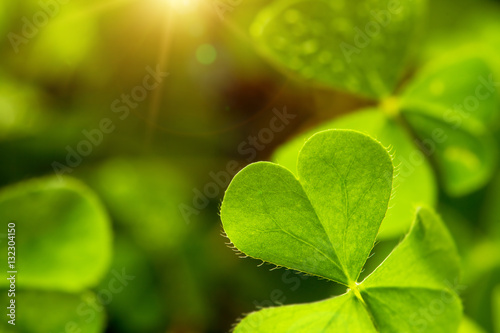Stampa su Tela clover leaf in lens flare for Valentine background