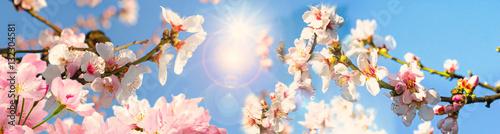 Fotobehang Lichtroze Glückwunsch, alles Liebe: Mandelblüten vor blauem Frühlingshimmel :)