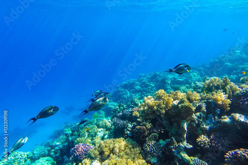Poster Coral reefs red sea underwater coral reef
