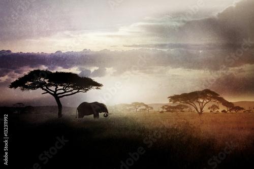 Wild elephant near a tree at sunset. Night landscape. Africa, Tanzania.
