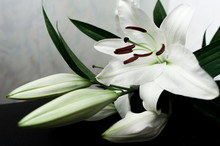 White Lily On A Black Background