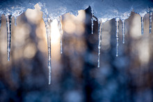 Icicles Hanging With Sun Rising Behind In A Forest