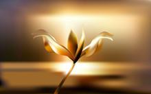 Precious Golden Flower In Hour...