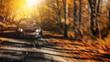 schnelles auto fährt schnell bei strahlender sonne durch den wald