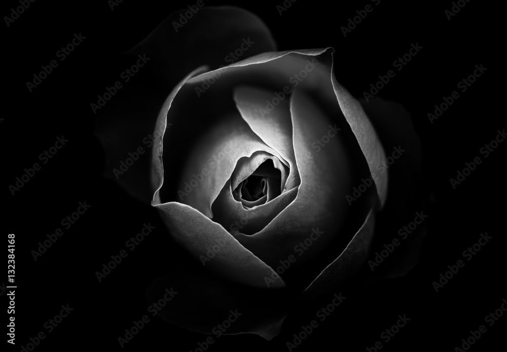 Photo Art Print Abstract Rose With Black Background