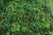 Leinwandbild Motiv green tropical decorate plant garden fresh nature background