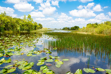 Florida Wetland, Airboat Ride ...