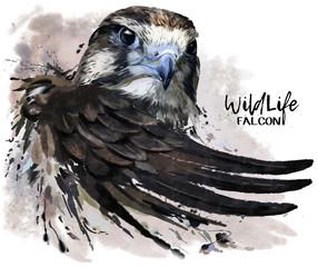 Obraz Falcon watercolor painting