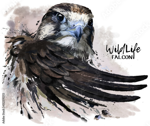 Falcon watercolor painting Canvas Print