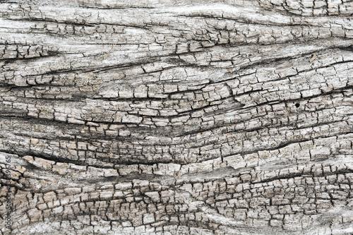Aluminium Prints Firewood texture Texture of old wood background
