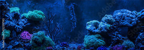 Photo Stands Coral reefs Reef tank, marine aquarium. Gorgonaria Euplexaura, Sea Fan. Clavularia. Zoanthus. Blue aquarium full of plants. Tank filled with water for keeping live underwater animals. Night view.