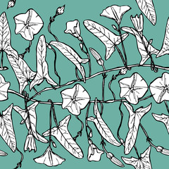 branch with leaves buds and flowers bindweed floral seamless pattern Leaves contours on light green blue background hand-drawn. Vector