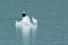 Eagle On Ice 2