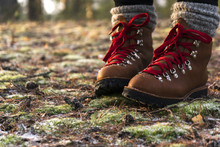 Person Is Walking In Brown Leather Boots With Red Laces In The Forest On The Land With Green Moss And Dried Needles Covered With Frost And Snowflakes